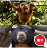 Sepilok Orang Utan, Bornean Sun Bear Conservation Centre & Rainforest Discovery Centre