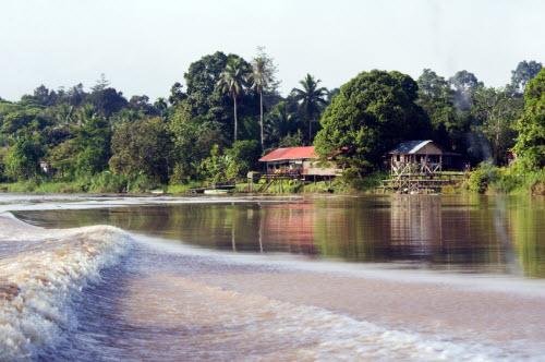 Cruising Kinabatangan River