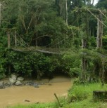 Danum Valley (4 Days 3 Nights)