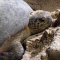 Selingan (Turtle) Island